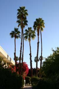 Palms300