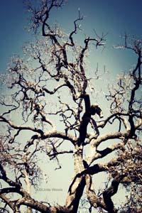 Tree300