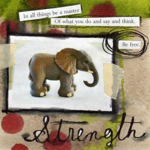 Elephant300