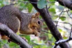 Squirrel_002