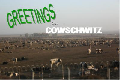 Cowschwitzwhite